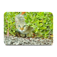 Hidden Domestic Cat With Alert Expression Plate Mats