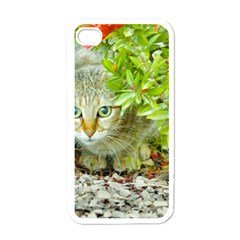 Hidden Domestic Cat With Alert Expression Apple Iphone 4 Case (white)