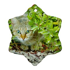 Hidden Domestic Cat With Alert Expression Snowflake Ornament (two Sides)