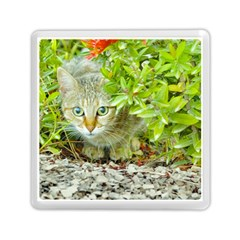 Hidden Domestic Cat With Alert Expression Memory Card Reader (square)