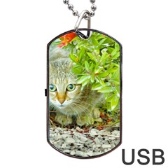 Hidden Domestic Cat With Alert Expression Dog Tag Usb Flash (one Side)