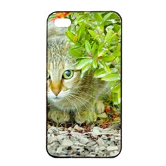 Hidden Domestic Cat With Alert Expression Apple Iphone 4/4s Seamless Case (black)