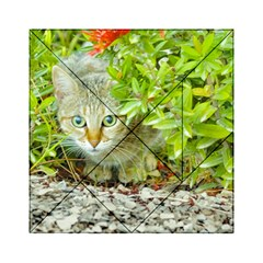 Hidden Domestic Cat With Alert Expression Acrylic Tangram Puzzle (6  X 6 )