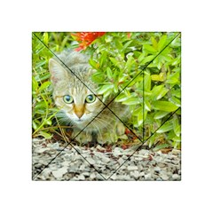 Hidden Domestic Cat With Alert Expression Acrylic Tangram Puzzle (4  X 4 )