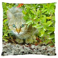 Hidden Domestic Cat With Alert Expression Large Cushion Case (two Sides)