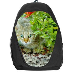 Hidden Domestic Cat With Alert Expression Backpack Bag
