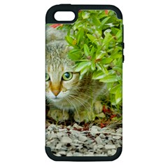 Hidden Domestic Cat With Alert Expression Apple Iphone 5 Hardshell Case (pc+silicone)