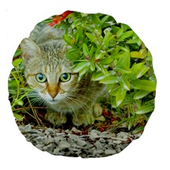 Hidden Domestic Cat With Alert Expression Large 18  Premium Round Cushions