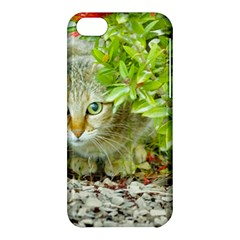 Hidden Domestic Cat With Alert Expression Apple Iphone 5c Hardshell Case