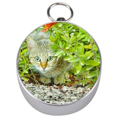 Hidden Domestic Cat With Alert Expression Silver Compasses