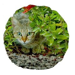 Hidden Domestic Cat With Alert Expression Large 18  Premium Flano Round Cushions