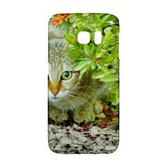 Hidden Domestic Cat With Alert Expression Galaxy S6 Edge