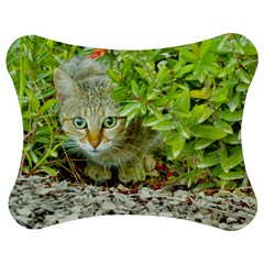 Hidden Domestic Cat With Alert Expression Jigsaw Puzzle Photo Stand (bow)