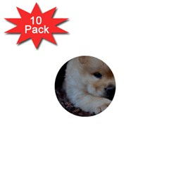 Puppy Chow Chow 1  Mini Buttons (10 Pack)
