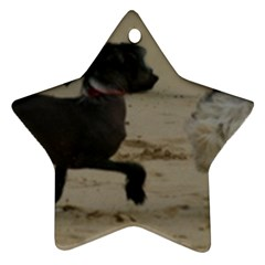 2 Chinese Crested Playing Ornament (star)
