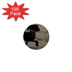 2 Chinese Crested Playing 1  Mini Buttons (100 Pack)