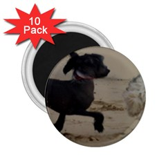 2 Chinese Crested Playing 2 25  Magnets (10 Pack)