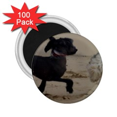 2 Chinese Crested Playing 2 25  Magnets (100 Pack)