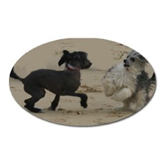 2 Chinese Crested Playing Oval Magnet