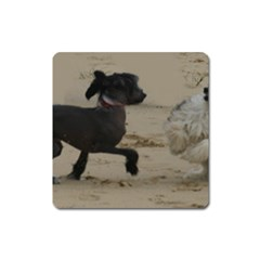 2 Chinese Crested Playing Square Magnet