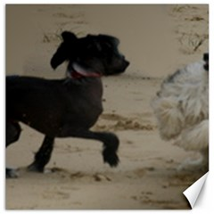 2 Chinese Crested Playing Canvas 20  X 20