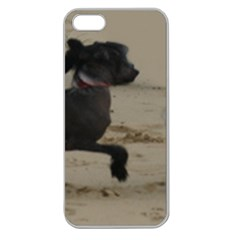 2 Chinese Crested Playing Apple Seamless Iphone 5 Case (clear)