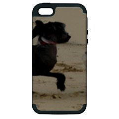 2 Chinese Crested Playing Apple Iphone 5 Hardshell Case (pc+silicone)