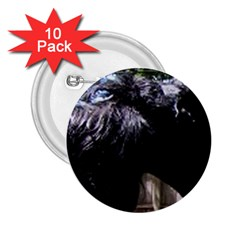 Giant Schnauzer 2 25  Buttons (10 Pack)