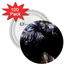 Giant Schnauzer 2 25  Buttons (100 Pack)