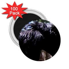 Giant Schnauzer 2 25  Magnets (100 Pack)