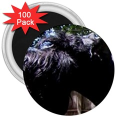 Giant Schnauzer 3  Magnets (100 Pack)