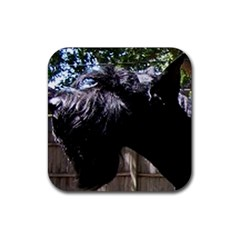 Giant Schnauzer Rubber Square Coaster (4 Pack)