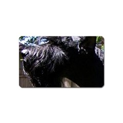 Giant Schnauzer Magnet (name Card)