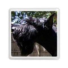 Giant Schnauzer Memory Card Reader (square)