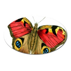 Butterfly Bright Vintage Drawing Oval Magnet