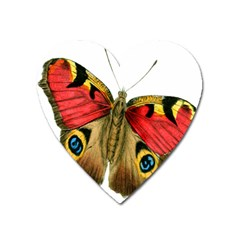 Butterfly Bright Vintage Drawing Heart Magnet