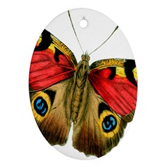 Butterfly Bright Vintage Drawing Oval Ornament (two Sides)