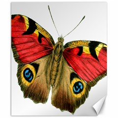 Butterfly Bright Vintage Drawing Canvas 8  X 10