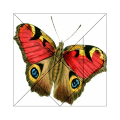 Butterfly Bright Vintage Drawing Acrylic Tangram Puzzle (6  X 6 )