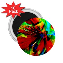 Flowers With Color Kick 1 2 25  Magnets (10 Pack)