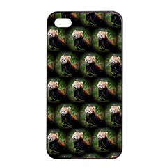 Cute Animal Drops   Red Panda Apple Iphone 4/4s Seamless Case (black)