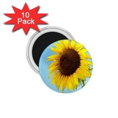 Sunflower 1 75  Magnets (10 Pack)