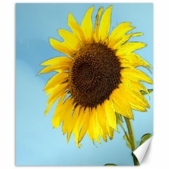 Sunflower Canvas 20  X 24