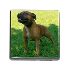 3 Full Staffordshire Bull Terrier Memory Card Reader (square)