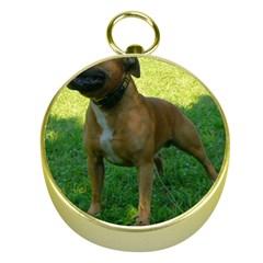 3 Full Staffordshire Bull Terrier Gold Compasses