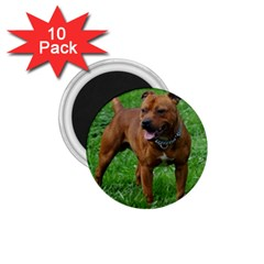 4 Full Staffordshire Bull Terrier 1 75  Magnets (10 Pack)