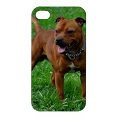 4 Full Staffordshire Bull Terrier Apple Iphone 4/4s Premium Hardshell Case