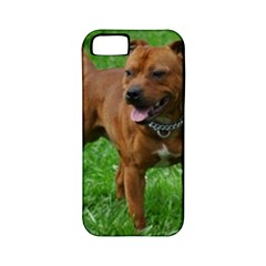 4 Full Staffordshire Bull Terrier Apple Iphone 5 Classic Hardshell Case (pc+silicone)