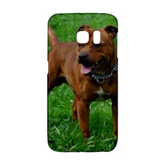 4 Full Staffordshire Bull Terrier Galaxy S6 Edge