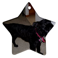 Bouvier Shaved Ornament (star)
